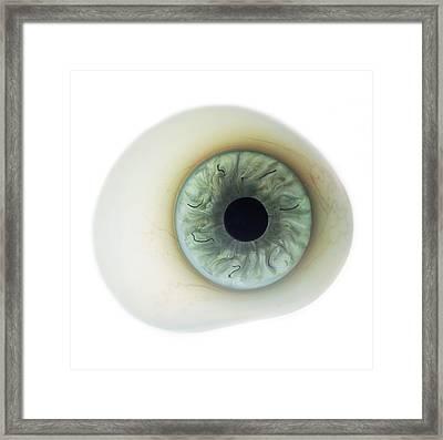 False Eye Framed Print