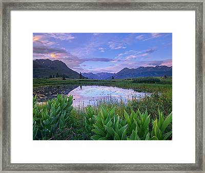 False Hellebore Surrounded Pond Framed Print by Tim Fitzharris