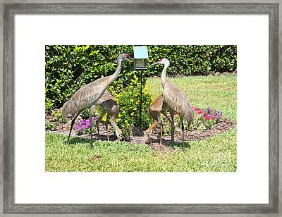 Family Meal Time Framed Print by Carol Groenen