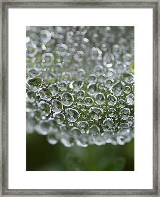 Family Framed Print by Rebecca Cozart