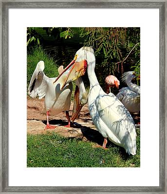 Framed Print featuring the photograph Family Squabble by Jo Sheehan
