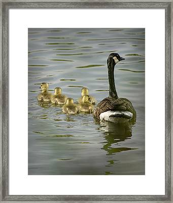 Family Swim Framed Print