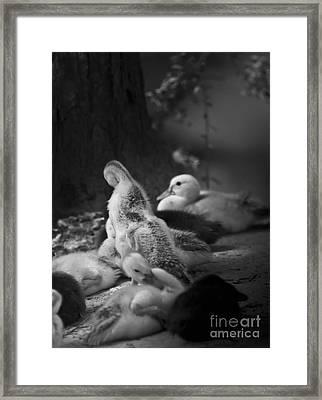 Family Time Framed Print by Kim Henderson