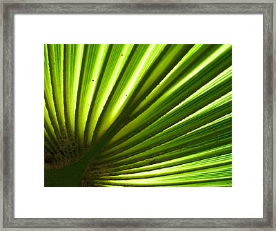 Framed Print featuring the photograph Fan Frond by Ginny Schmidt