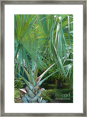 Fan Palm Framed Print