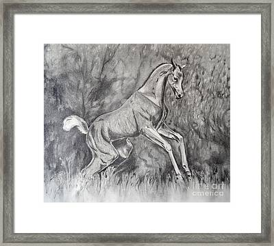 Fancifilly Framed Print