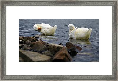 Fancy Feathers Framed Print by Brian Stevens