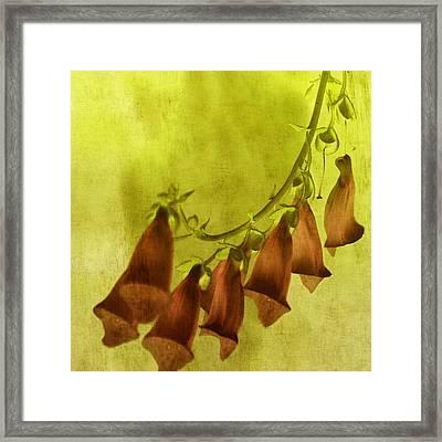Fancy Foxglove Framed Print by Bonnie Bruno