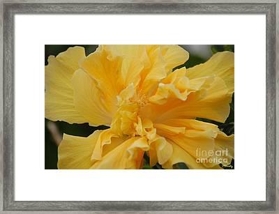 Fancy Hibiscus Framed Print