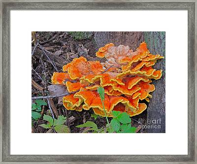 Framed Print featuring the photograph Fancy Shelf Mushroom by Joan McArthur