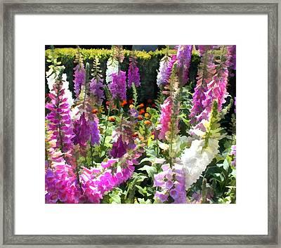 Fanfare Of Foxgloves Framed Print