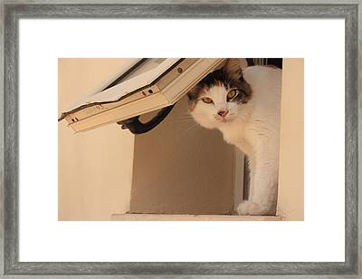Fantasia Here's Looking At You Kid Framed Print