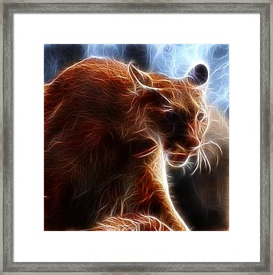 Fantasy Cougar Framed Print by Paul Ward