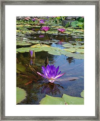 Framed Print featuring the photograph Fantasy by Elizabeth Sullivan