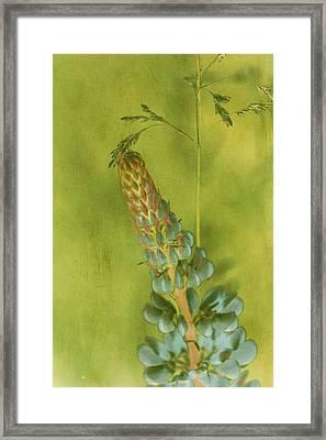 Fantasy Floral No.1 Framed Print by Bonnie Bruno