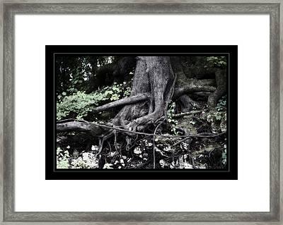 Fantasy Roots Framed Print by Linda Olsen
