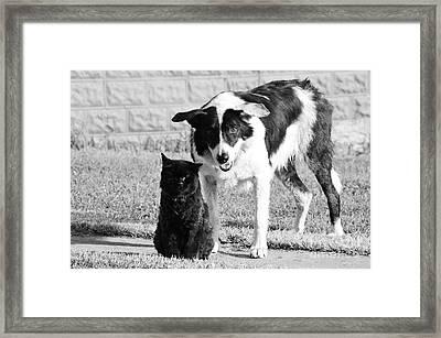 Farm Cat And Border Collie Framed Print by Thomas R Fletcher