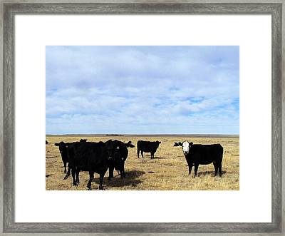 Farm Friends Framed Print by Clarice  Lakota