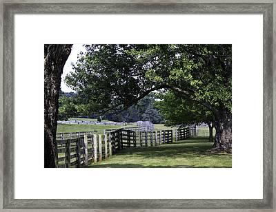 Farmland Shade Appomattox Virginia Framed Print by Teresa Mucha