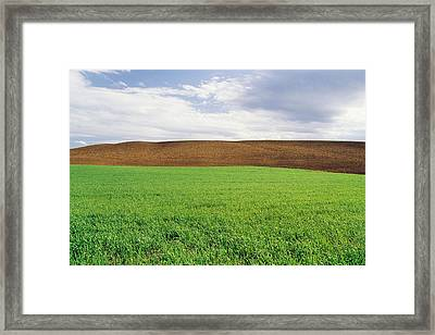 Farmland With Early Growth Grain Framed Print by Dave Reede
