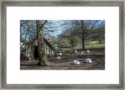 Farmyard Geese Framed Print by Dawn OConnor
