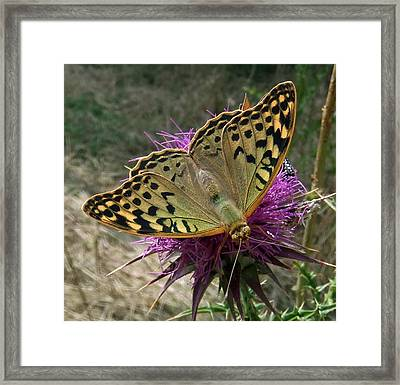 Fashion Show Framed Print by Eric Kempson