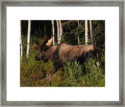 Framed Print featuring the photograph Fast Mover by Doug Lloyd