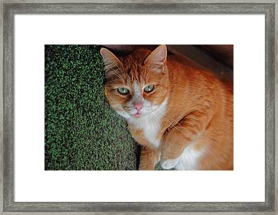 Fat Cats Of Ballard 6 Framed Print