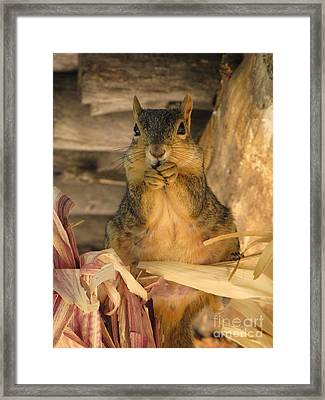 Fat N Sassy Framed Print by Michelle H
