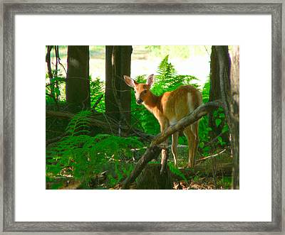 Fawn In The Woods Framed Print by Artistic Photos