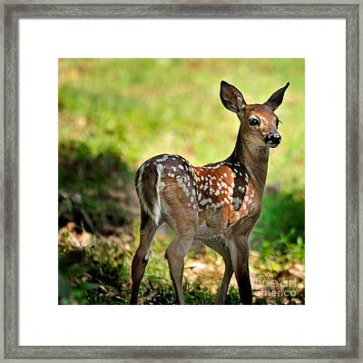 Fawn Toddler Framed Print by Nava Thompson
