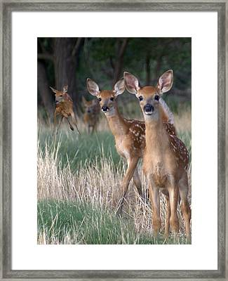 Fawns Fawns Framed Print by Bill Stephens