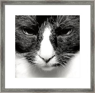 Fearless Feline Framed Print