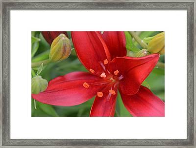 Fearless Floral Framed Print by Tanya Tanski