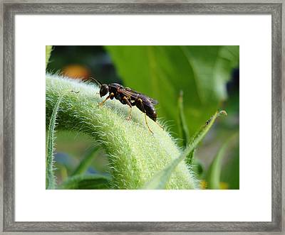 Fears Calmed By Morning Dew Framed Print by Katie Bauer