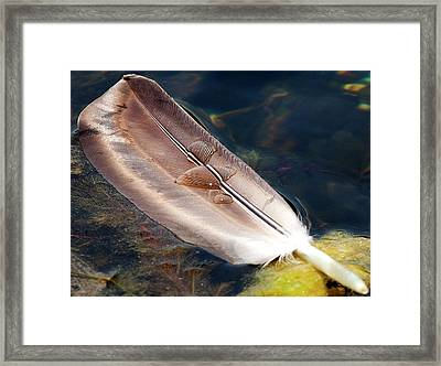 Feather 1 Framed Print by Sara Hudock