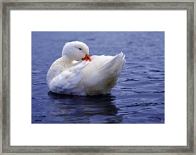 Feather Fixer Framed Print by Brian Stevens