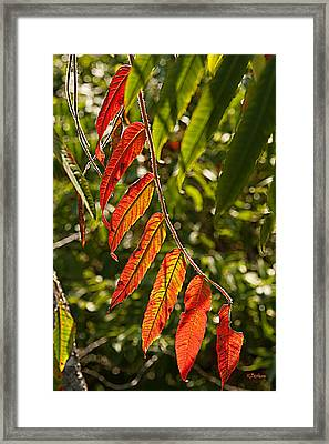 Feather Like Framed Print by Kat Besthorn