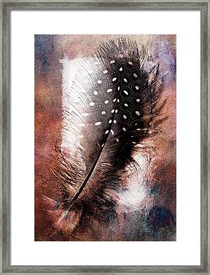 Feather Framed Print by Mauro Celotti