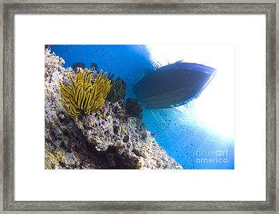 Feather Stars With A Boat Framed Print by Steve Jones