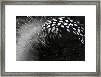 Feather Swirl Framed Print