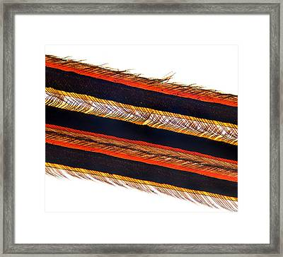 Feather Vane, Light Micrograph Framed Print by Dr Keith Wheeler