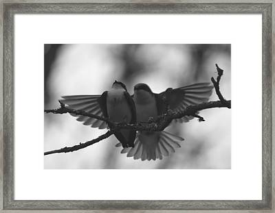 Feathered Encounter Framed Print by Angie Vogel