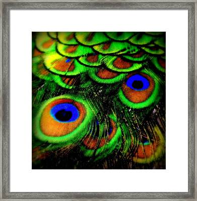 Feathers Framed Print by Karen Wiles