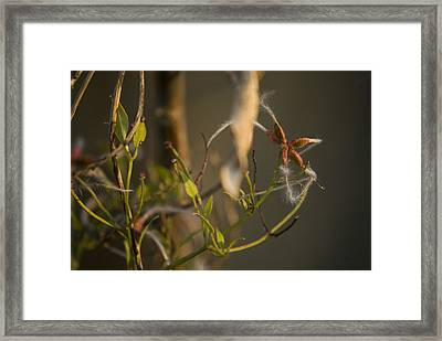 Feathery Seed  Framed Print