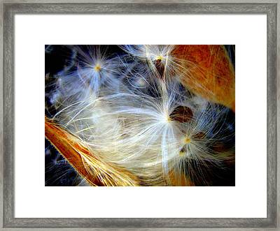 Feathery Spider Framed Print by Bruce Carpenter