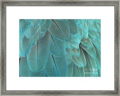 Feathery Turquoise Framed Print by Sabrina L Ryan