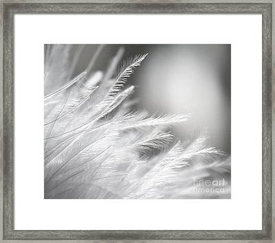 Feathery White Framed Print