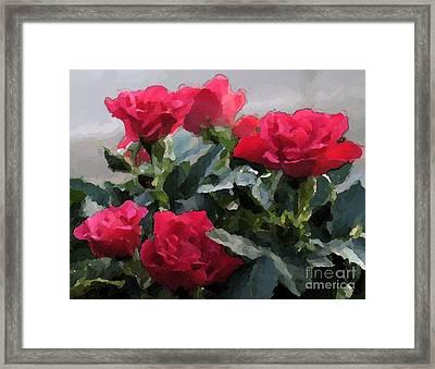 February Roses Framed Print