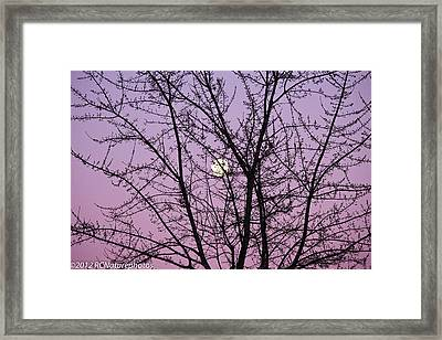Framed Print featuring the photograph February's Full Moon by Rachel Cohen